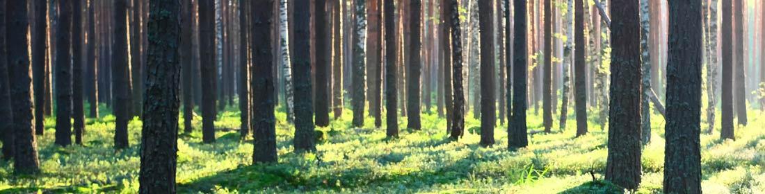 עצי הסקה שנכרתים בפיקוח