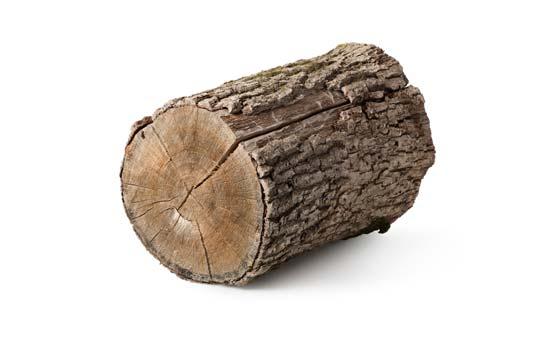 בחירת עצים להסקה